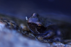 IMG_6314-Frosch-ID0200-Doc