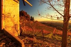 IMG_8724 Herbst im Weingarten ID0505 Doc