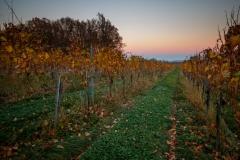IMG_8726 Herbst im Weingarten ID0506 Doc